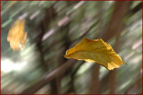 foglie-al-vento.jpg